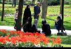 Razavi Khorasan, Iran - Mashhad, Bulbous Flowers Festival 04